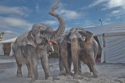 [Filename: elephantwalk-271.jpg]   Copyright 2011 - Michael Blitch Photography