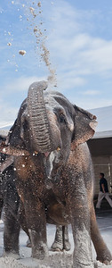 [Filename: elephantwalk-265-Edit.jpg]   Copyright 2011 - Michael Blitch Photography