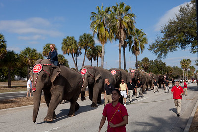 [Filename: elephantwalk-63-1.jpg]   Copyright 2011 - Michael Blitch Photography