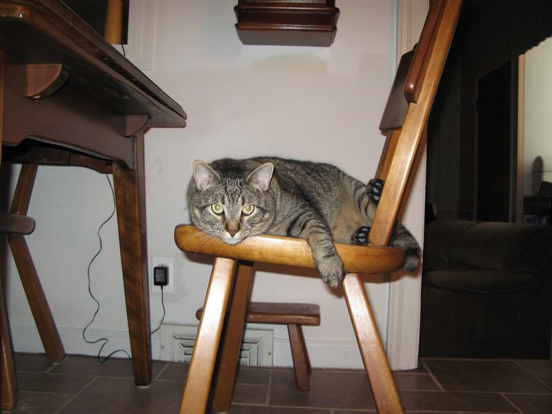 Taylor, A.K.A.  Fat Cat
