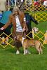 091002-TerrierShow-038