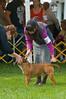 091002-TerrierShow-168