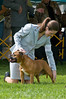 091002-TerrierShow-219