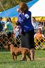 091002-TerrierShow-242