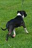 091002-TerrierShow-025