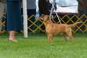 091002-TerrierShow-141