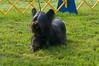 091002-TerrierShow-055