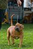 091002-TerrierShow-151