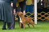 091002-TerrierShow-140