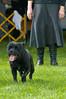 091002-TerrierShow-165