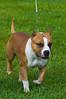 091002-TerrierShow-027