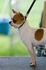 091002-TerrierShow-128
