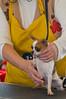 091002-TerrierShow-126