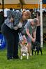 091002-TerrierShow-194