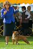 091002-TerrierShow-233