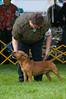 091002-TerrierShow-152