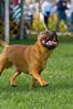 091002-TerrierShow-148