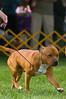 091002-TerrierShow-143