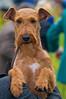 091002-TerrierShow-006