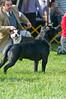 091002-TerrierShow-238