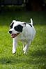 091002-TerrierShow-213