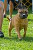 091002-TerrierShow-235