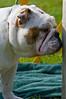 091002-TerrierShow-059