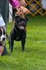 091002-TerrierShow-157