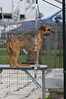 091002-TerrierShow-010