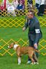 091002-TerrierShow-018