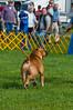 091002-TerrierShow-047