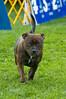 091002-TerrierShow-192