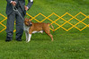 091002-TerrierShow-036