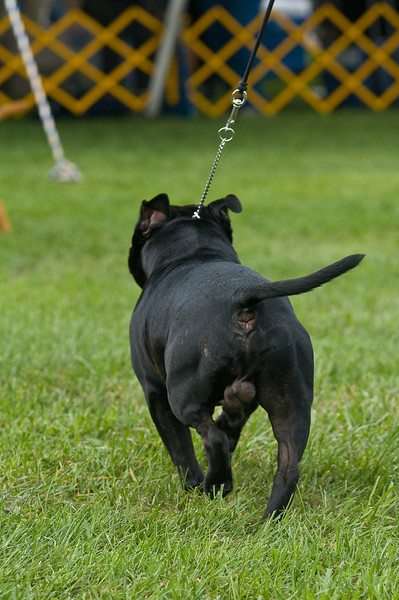 091002-TerrierShow-175