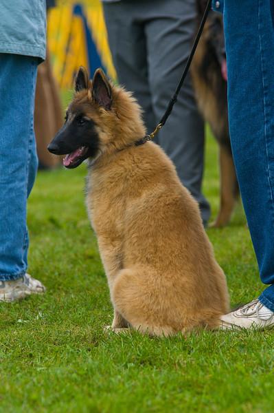 091002-TerrierShow-003