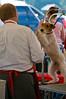 091002-TerrierShow-121