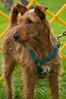 091002-TerrierShow-005