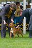 091002-TerrierShow-142
