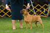 091002-TerrierShow-173
