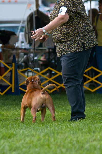 091002-TerrierShow-153