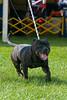 091002-TerrierShow-226