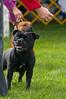 091002-TerrierShow-155