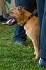 091002-TerrierShow-131