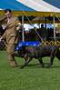 091002-TerrierShow-093