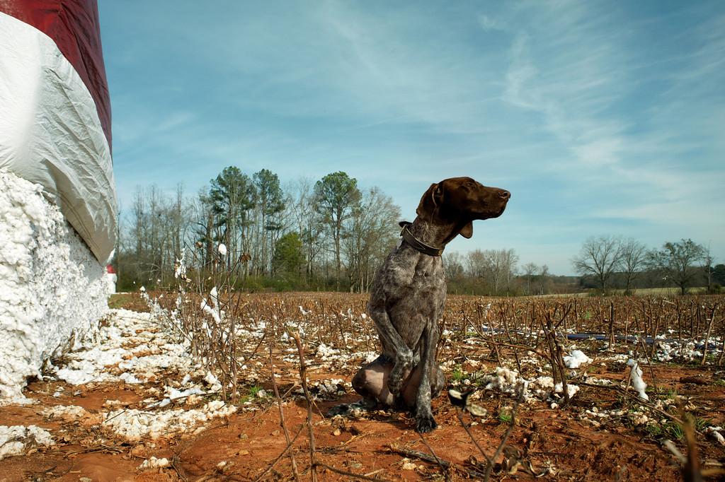 Morgan County (GA) December 2012