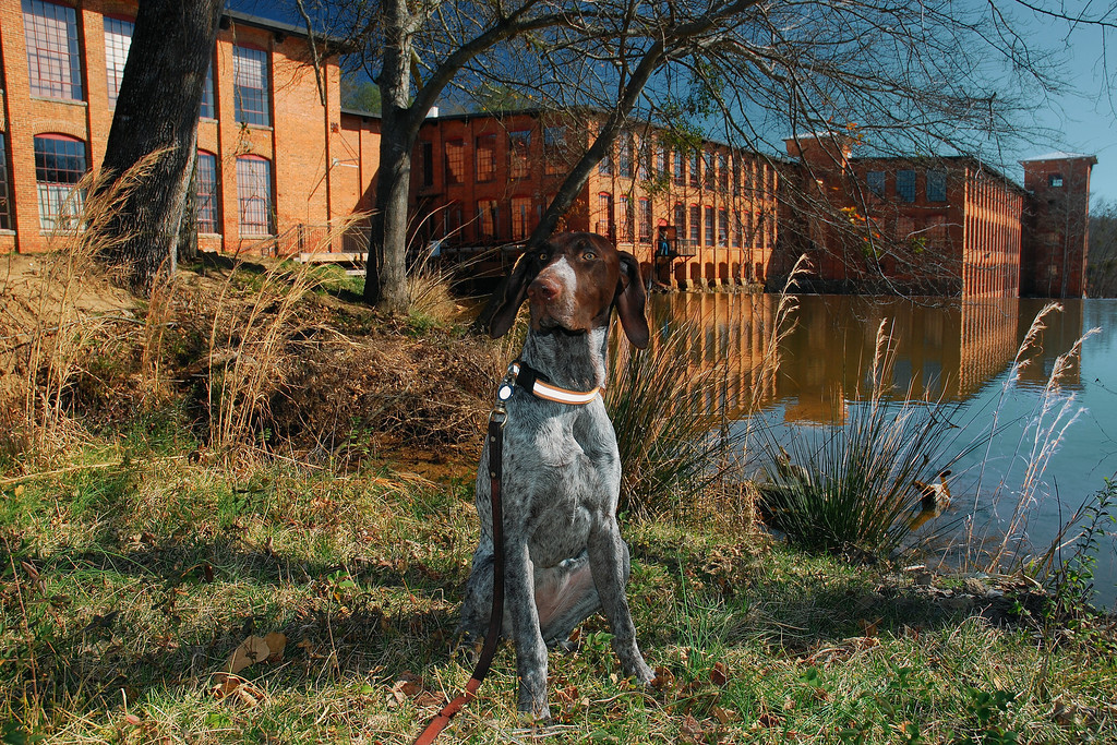 Tessa [January 31, 2009] Porterdale, GA (Newton County)