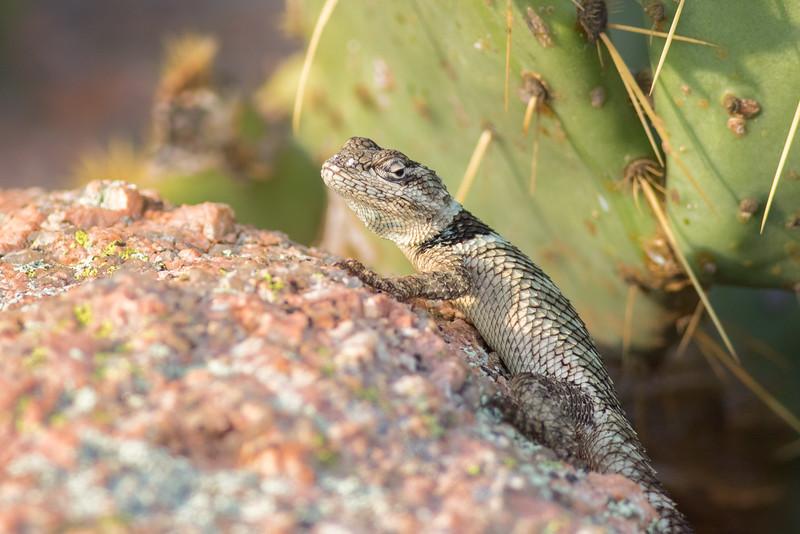 lizard smugmug