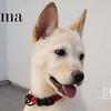 _DSC1185-2 Lama Watermark
