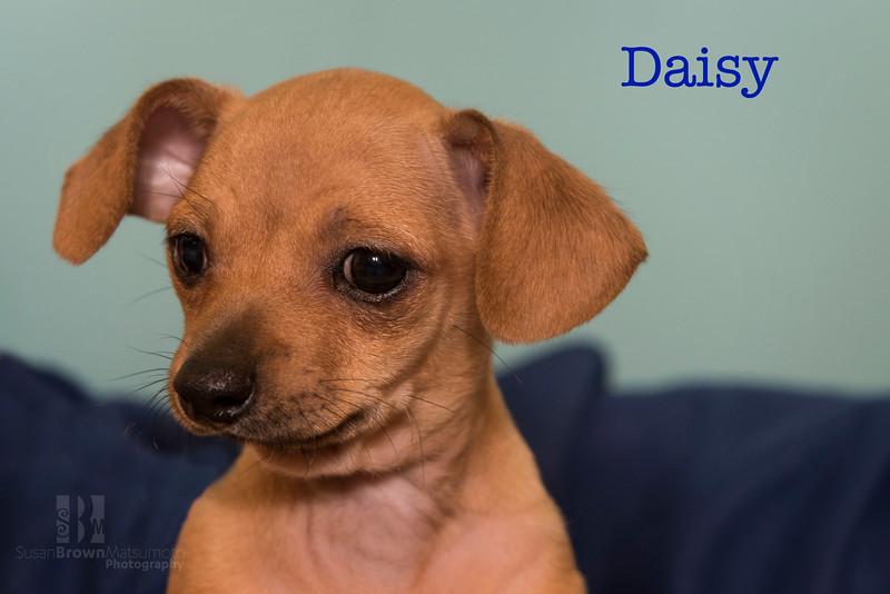 Daisy 2WMN