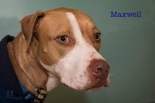 Maxwell 1 WMN